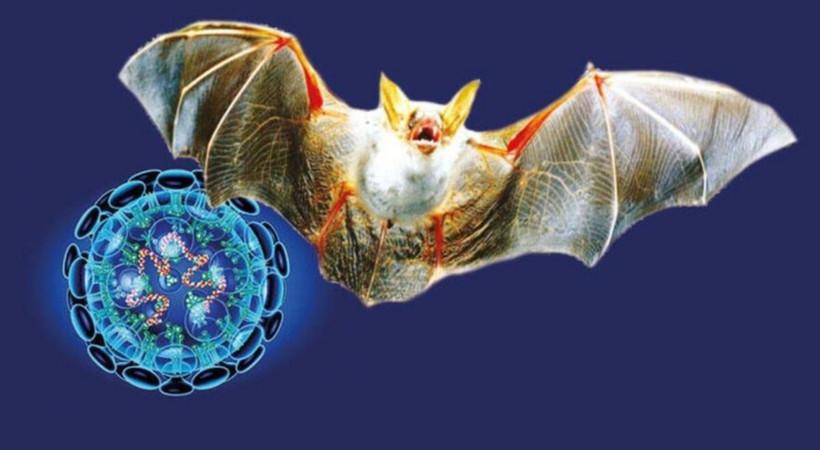Corona benzeri yeni bir virüs keşfedildi