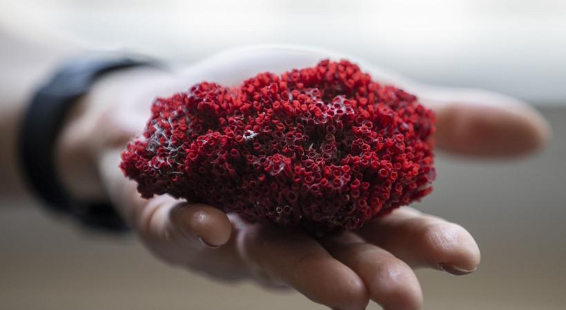Adet kanaması ve uyku için kullanılan kardeş kanı bitkisi ölüm getiriyor.... Kardeş kanı bitkisini kullananlar dikkat!