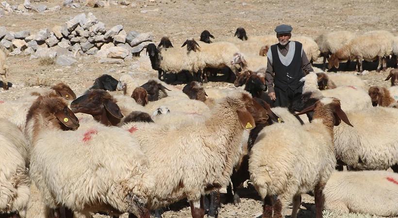 '5 bin liraya çalıştıracak çoban bulamıyoruz'