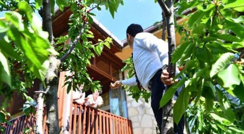 Ekrem İmamoğlu gazeteciler için kiraz topladı!