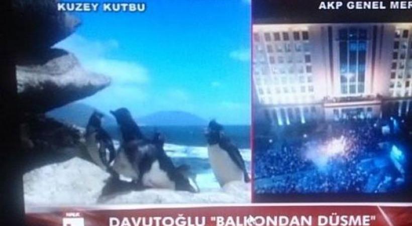Davutoğlu balkona çıktı, Halk TV 'penguen' göndermesi yaptı!