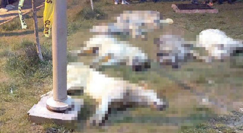 Ankara'daki köpek katilleri serbest bırakıldı!