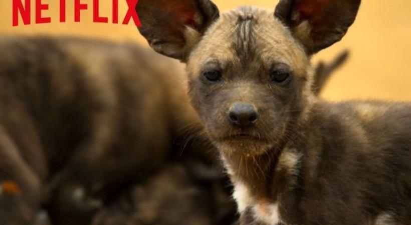 Netflix'ten yeni belgesel dizisi! İlk fragman Super Bowl etkinliğinde paylaşıldı