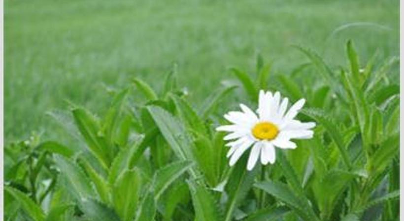 Gaziantep Harikalar Diyarı'nda bahar çiçekleri açmış