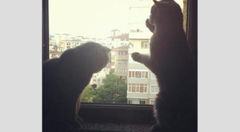 Camdaki kediler