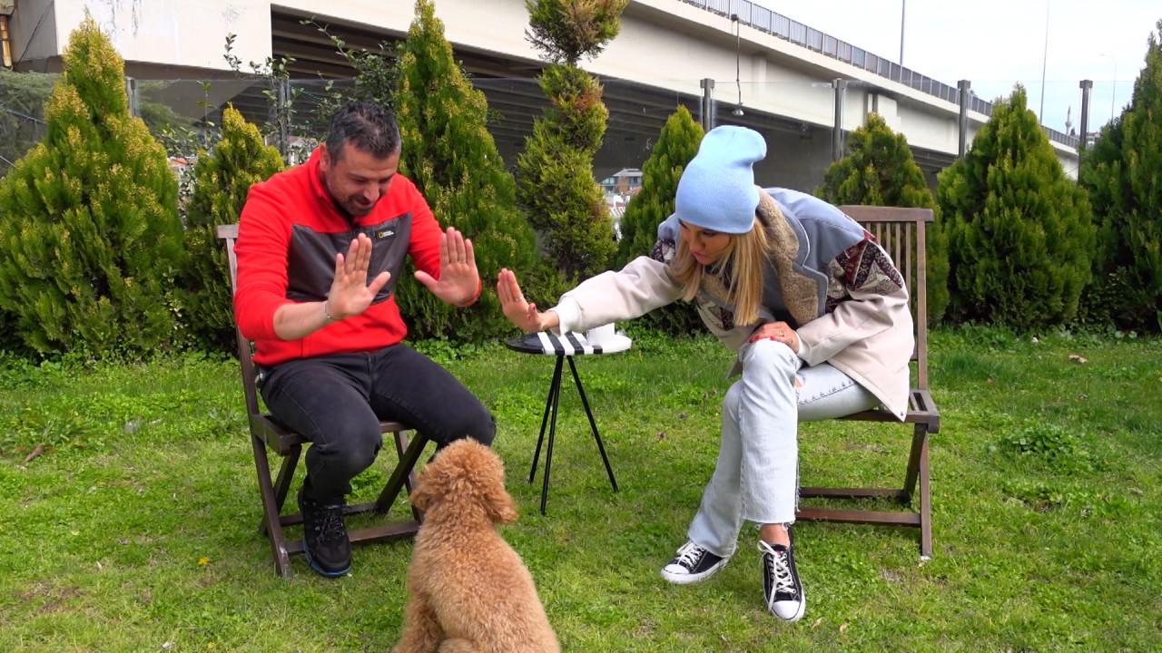 Çağla Şıkel köpeği Tarçın ile Dostumun Dünyası'nda
