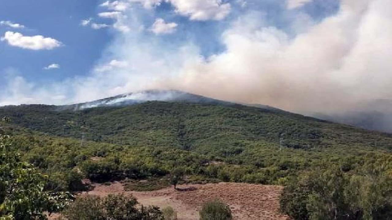 Tunceli'nin Ovacık ilçesi Otlubahçe köyü kırsalında ağaçlık alanda yangın çıktı